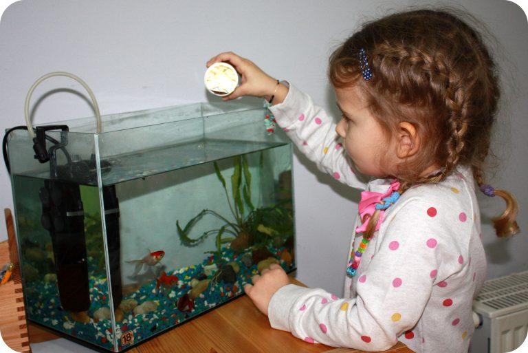 kącik hodowlany rybki